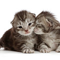 Snuggling Baby Kittens by Warren Photographic