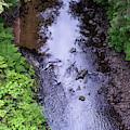 Soapstone Creek  by Robert Potts