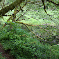 Soapstone Lake Trail by Robert Potts