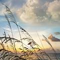 Soft Beach Breezes by Debra and Dave Vanderlaan