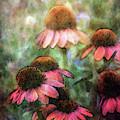 Soft Coneflowers 3992 Idp_2 by Steven Ward