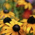 Soft Yellow 4621 Idp_2 by Steven Ward