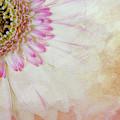 Softly Gerbera by Terry Davis