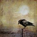 Solitary Crow by Theresa Tahara