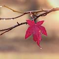 Solo Leaf by Jonathan Hansen