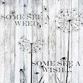 Some See A Weed Some See A Wish  by Shabby Chic and Vintage Art