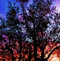 Sonoran Sunrise Ironwood Silhouette by Judy Kennedy