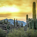 Sonoran Sunrise by Philip Rispin