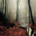 Sounds Of Silence by Dirk Wuestenhagen