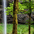 South Falls In Silver Falls State Park In Oregon by David Millenheft