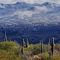Southern Arizona Snow by Chance Kafka