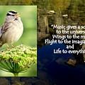Sparrows Music by Linda Vanoudenhaegen