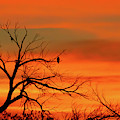 Spectacular Winter Sunrise by Sabrina L Ryan