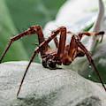 Spider by Dinesh Suthar