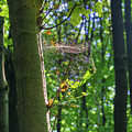 Spider Web In A Forest by Sun Travels