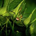 Spider by William Norton