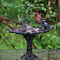 Splish Splash by Trina Ansel