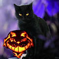 Spooky Halloween Cat And Pumpkin by Doc Braham