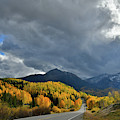 Spotlight On Aspens Along Highway 145 by Ray Mathis