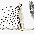 Spots Flying Off Dalmation Dog by Gandee Vasan