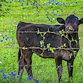 Spring Babe In The Bluebonnets by Lynn Bauer
