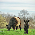 Spring Cattle Pasture  by JAMART Photography