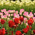 Spring Colors by Kristia Adams
