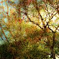 Spring Dream by Onyonet  Photo Studios
