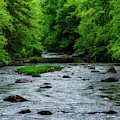 Spring Fishing Along Cranberry River by Thomas R Fletcher