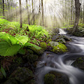 Spring Forest by Bill Wakeley