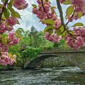 Spring Garden On The Bridge  by Michael Hughes