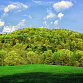 Spring Green In Vermont On The Appalachian Trail by Raymond Salani III
