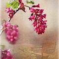 Spring In The Garden by Liz Alderdice