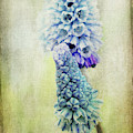 Spring Is Coming by Angela Doelling AD DESIGN Photo and PhotoArt