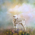 Spring Lamb by Jai Johnson