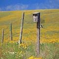 Spring On The Grasslands by Darrel Giesbrecht