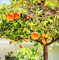 spring season in  Spain by Ariadna De Raadt