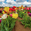 Spring Tulips by Louis Dallara