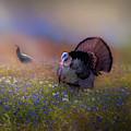 Spring Turkeys Square by Bill Wakeley