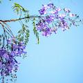 Springtime Beauty by Az Jackson