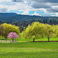 Springtime by Dan McGeorge