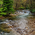 Springtime Gauley River Headwaters by Thomas R Fletcher