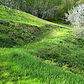Springtime Hillside by Tom Singleton