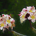Springtime In Hawaii by Pamela Walton
