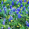 Spring Wildflowers041219 by Rospotte Photography