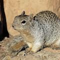 Squirrel by Magnus Haellquist