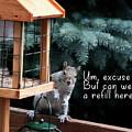 Squirrel Stealing Bird Food by Jeff Folger
