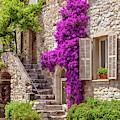 St Paul De Vence Flowers by Brian Jannsen
