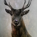 Stag by Amber Willis
