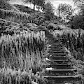 Stairway To The Sky Black And White by Debra and Dave Vanderlaan
